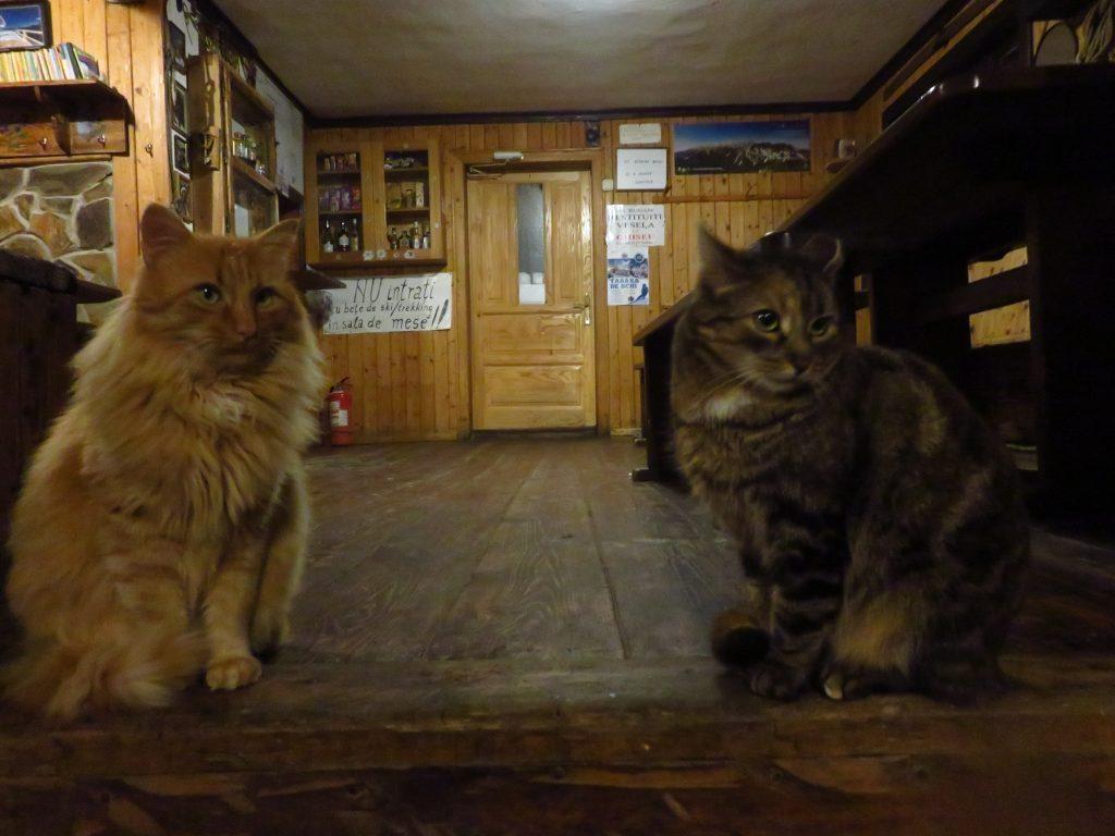 cabana curmatura cats