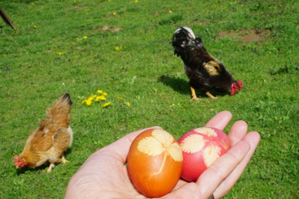 Easter eggs and chickens