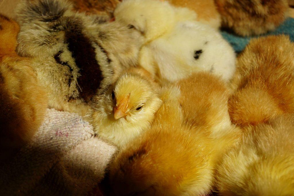 A boxful of chicklets