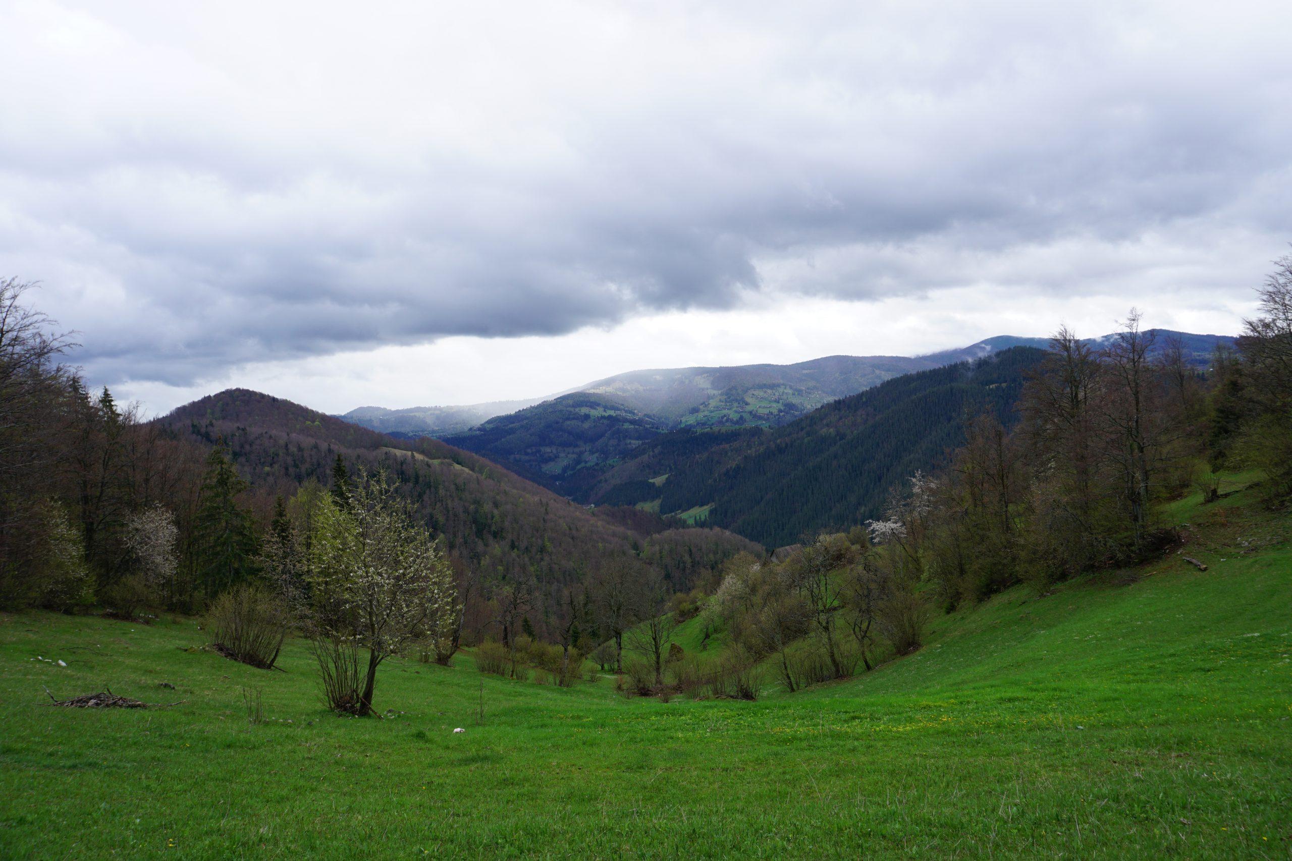Padis, Apuseni, Romania