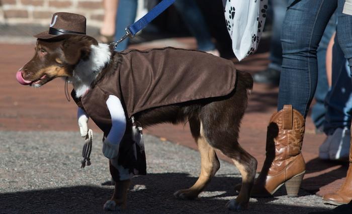 cowboy dog costume