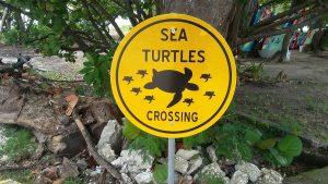 Sea Turtles Crossing