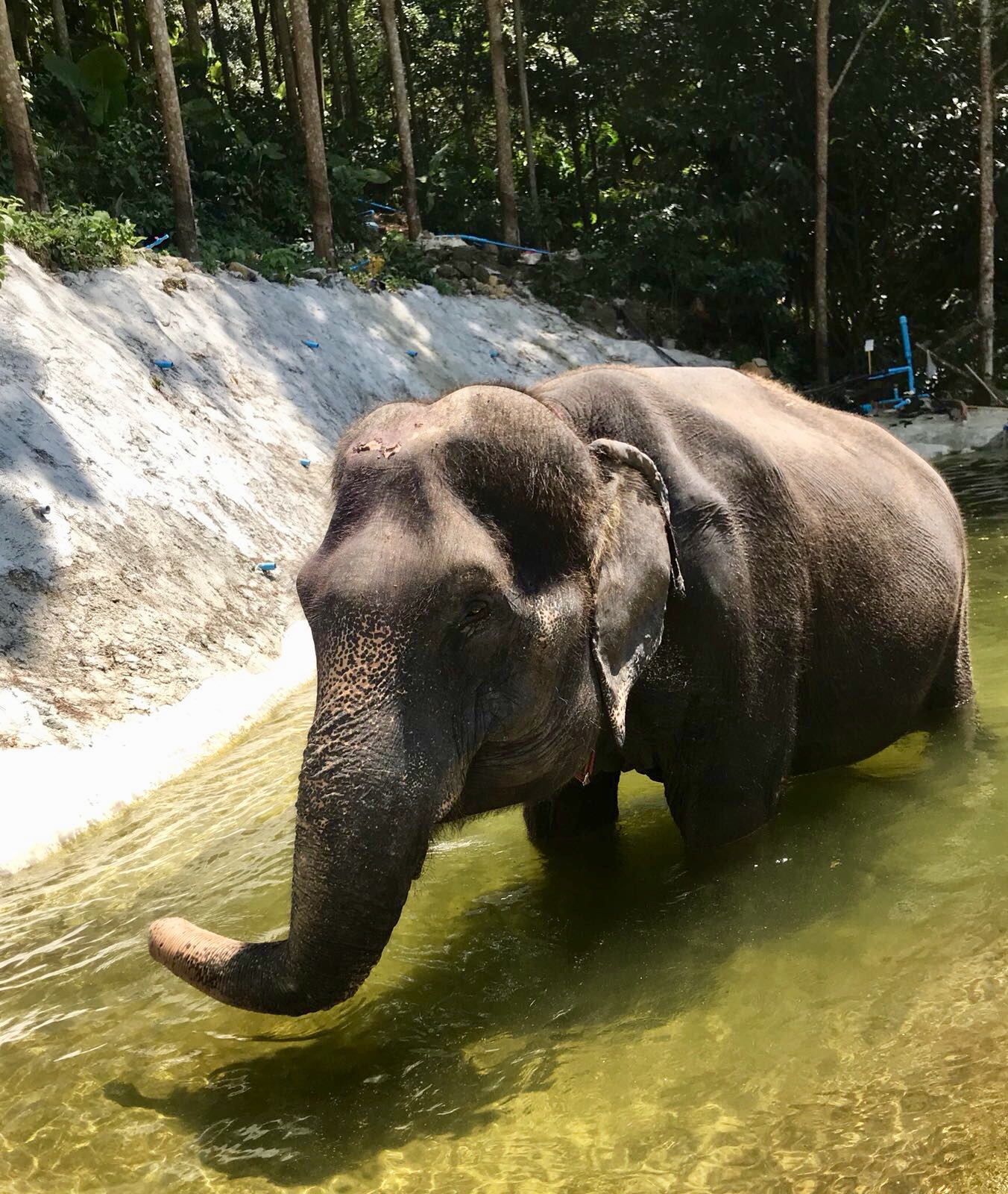 Lola, a 45 year old retired Asian elephant