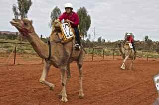 ayes rock camel r1