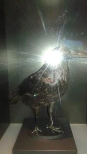 Dino Raven