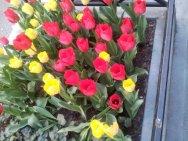 flowers-10