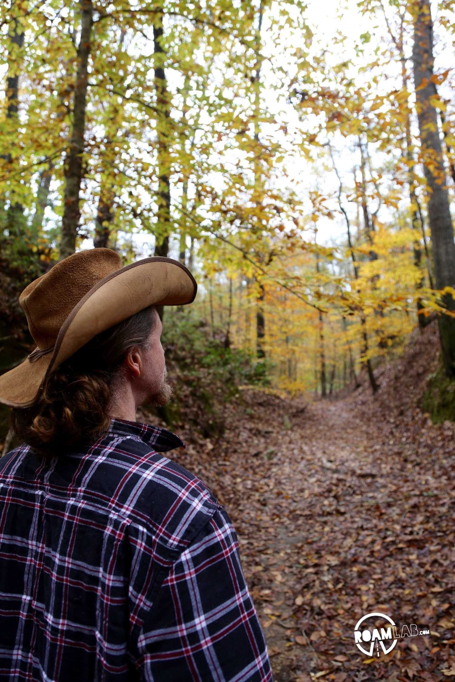 The Sunken Trace is the product of centuries of travel. Traders following the Natchez Trace wore down the trail so that, in places, the untrod ground may be above one's head.