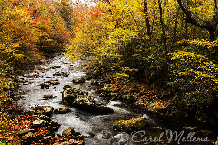 A rocky river in the Smoky Mountains, Tennessee in autumn with fall colors
