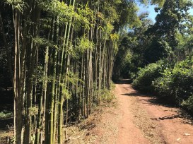 Bamboo path along our hike