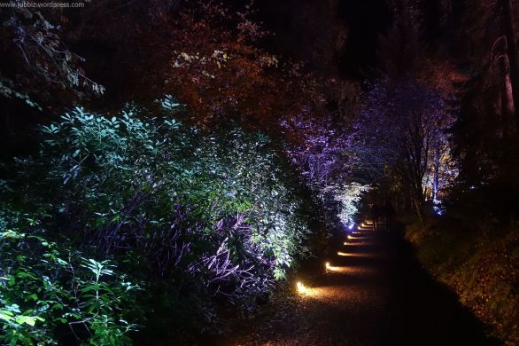 Enchanted Forest_1