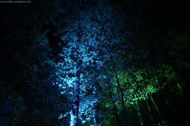 Enchanted Forest_10