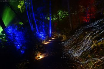 Enchanted Forest_18