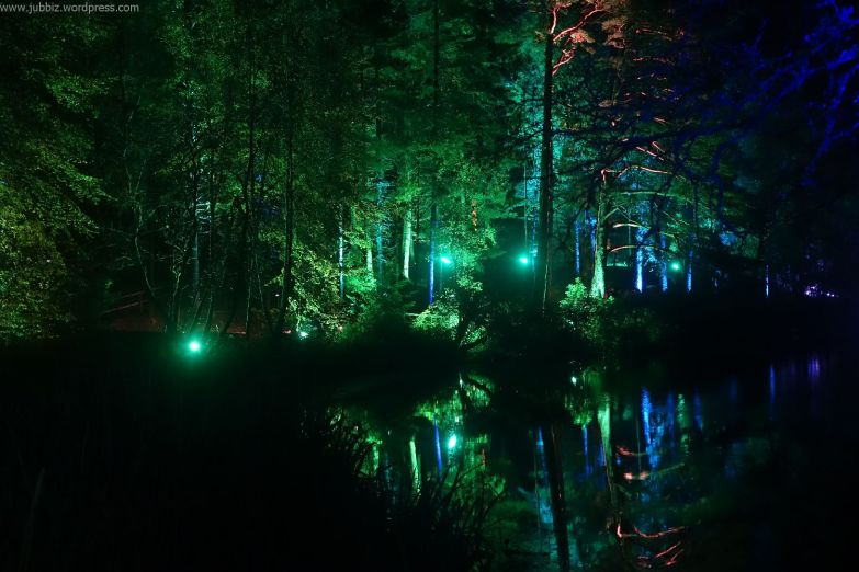 Enchanted Forest_25