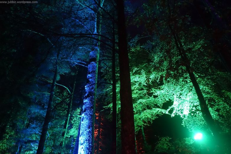 Enchanted Forest_29