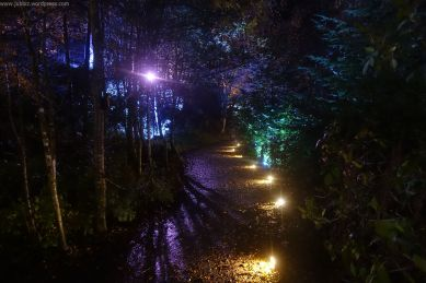 Enchanted Forest_44