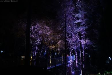 Enchanted Forest_55