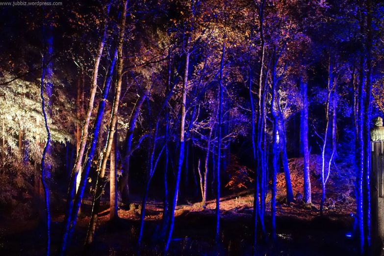 Enchanted Forest_57