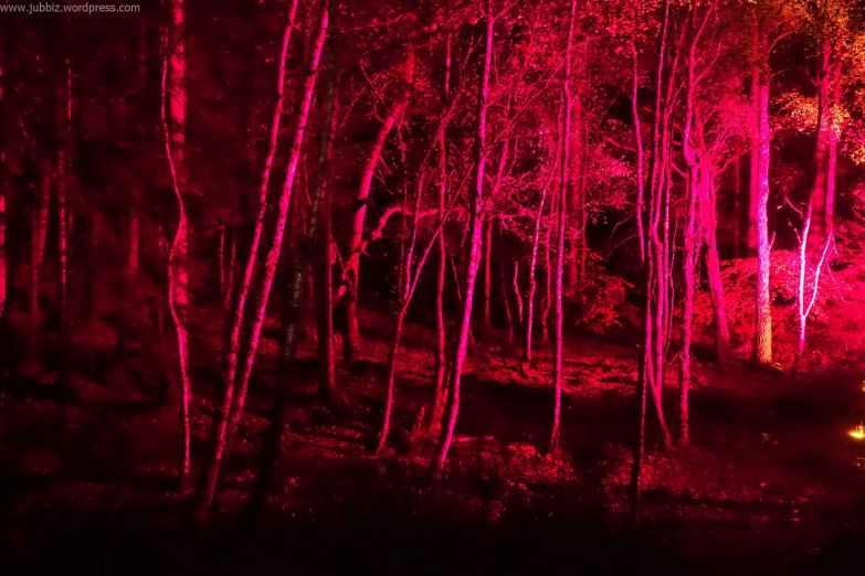 Enchanted Forest_58