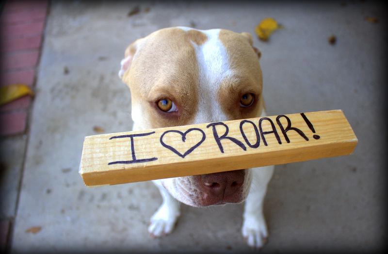 I Love Roar!