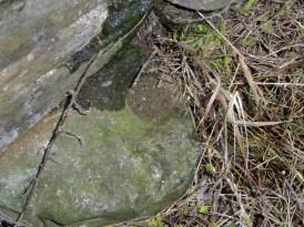 Dunmanus Spud Stone