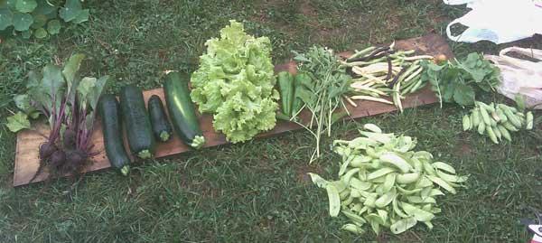 July 14 2010 harvest