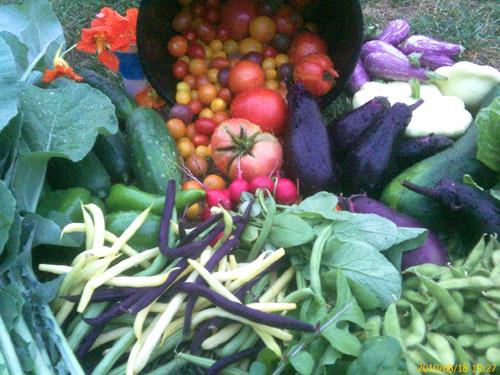 July 18 harvest