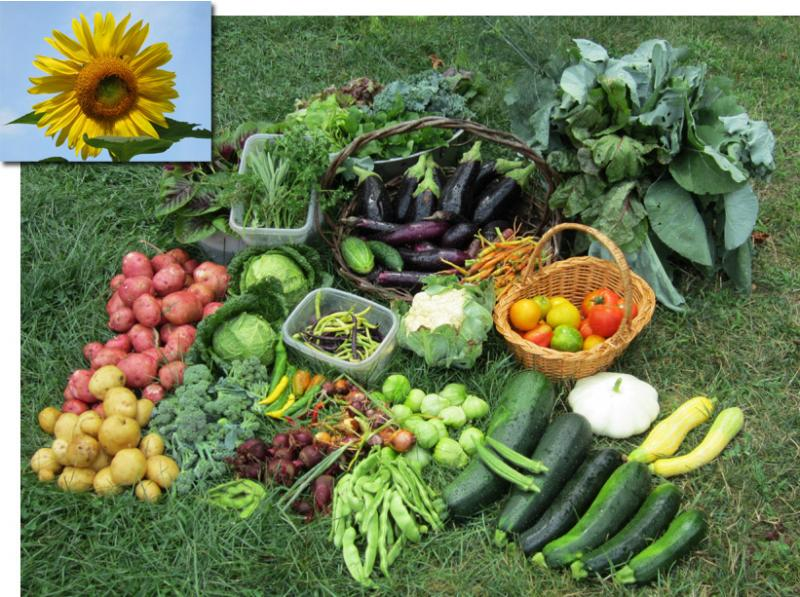 August 6 2011 harvest