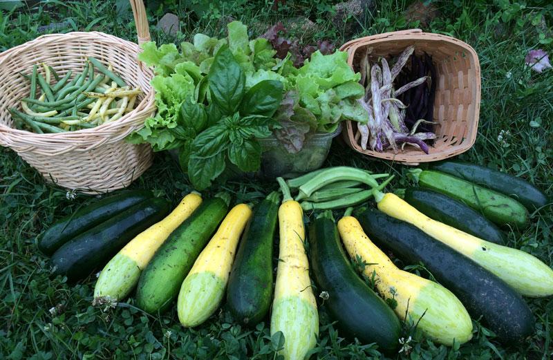 Harvest, July 16 2014