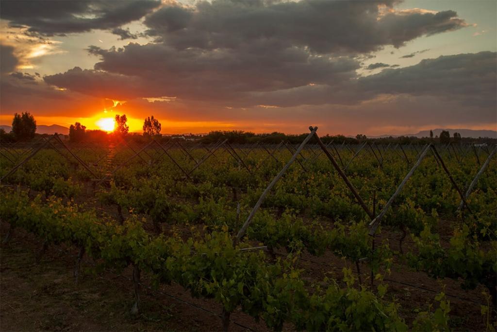 descuna 1024x683 - Cuatro experiencias en Cuna de Tierra para amantes del vino