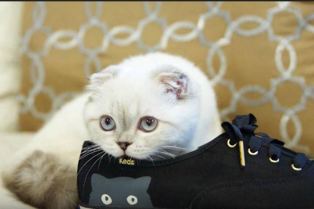 New Project 66 1024x683 - Conoce a los gatos más consentidos y millonarios del mundo