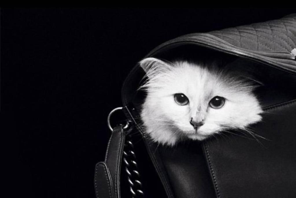 Conoce a los gatos más consentidos y millonarios del mundo