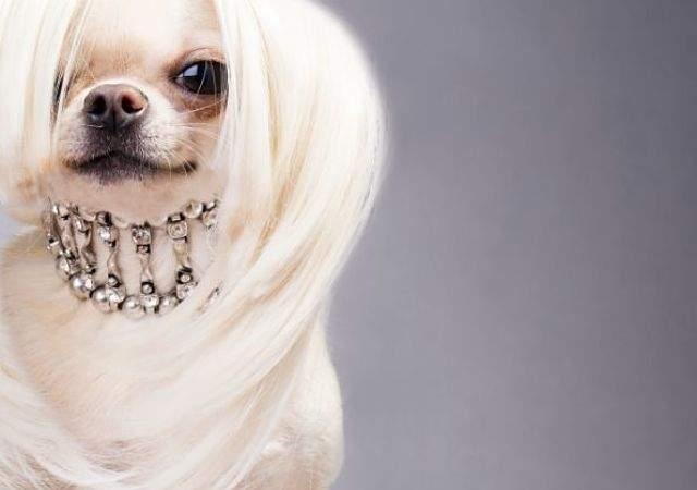 accesorios-de-lujo-para-perro