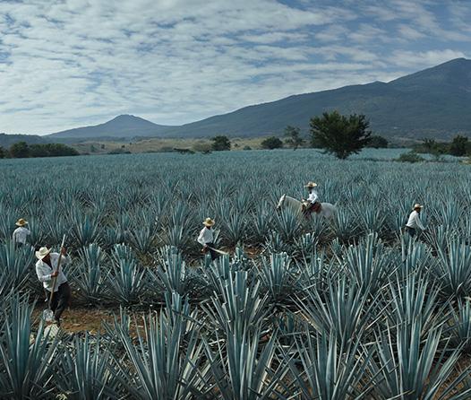 Reserva de la Familia José Cuervo, el verdadero lujo del tequila