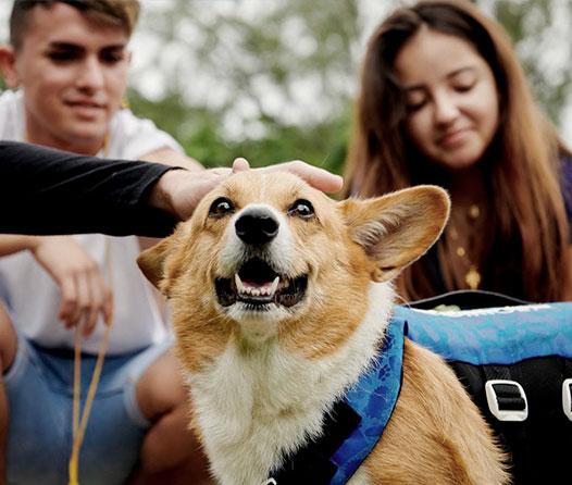 Airbnb ofrece turismo ético con animales para los viajeros del mundo