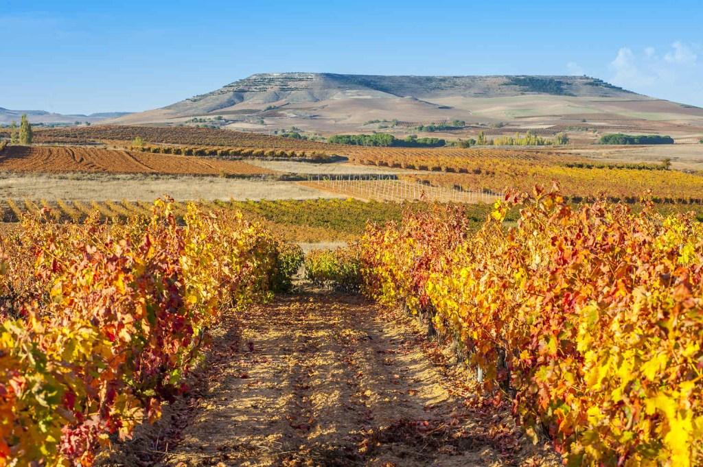 Estos son los vinos españoles top que los mexicanos prefieren