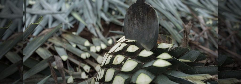 Jose Cuervo planea volver sustentable al mundo de los cócteles con el poder del agave