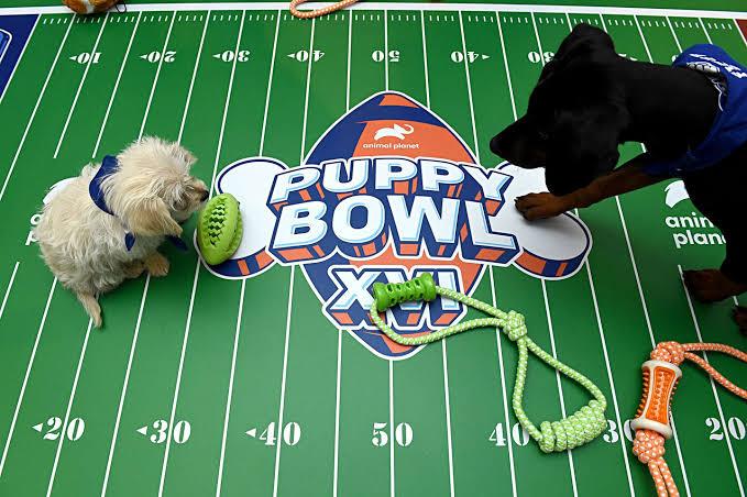 Puppy Bowl, el partido que todo amante de los perros debe ver