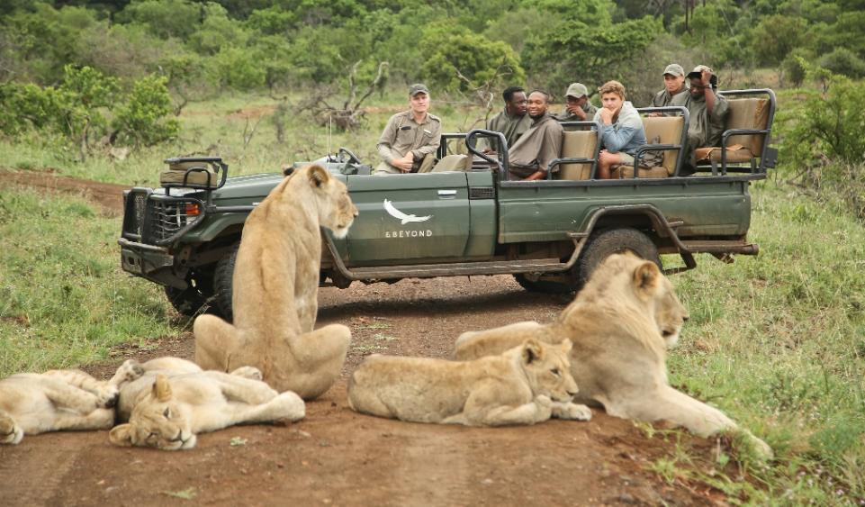 safaris leones