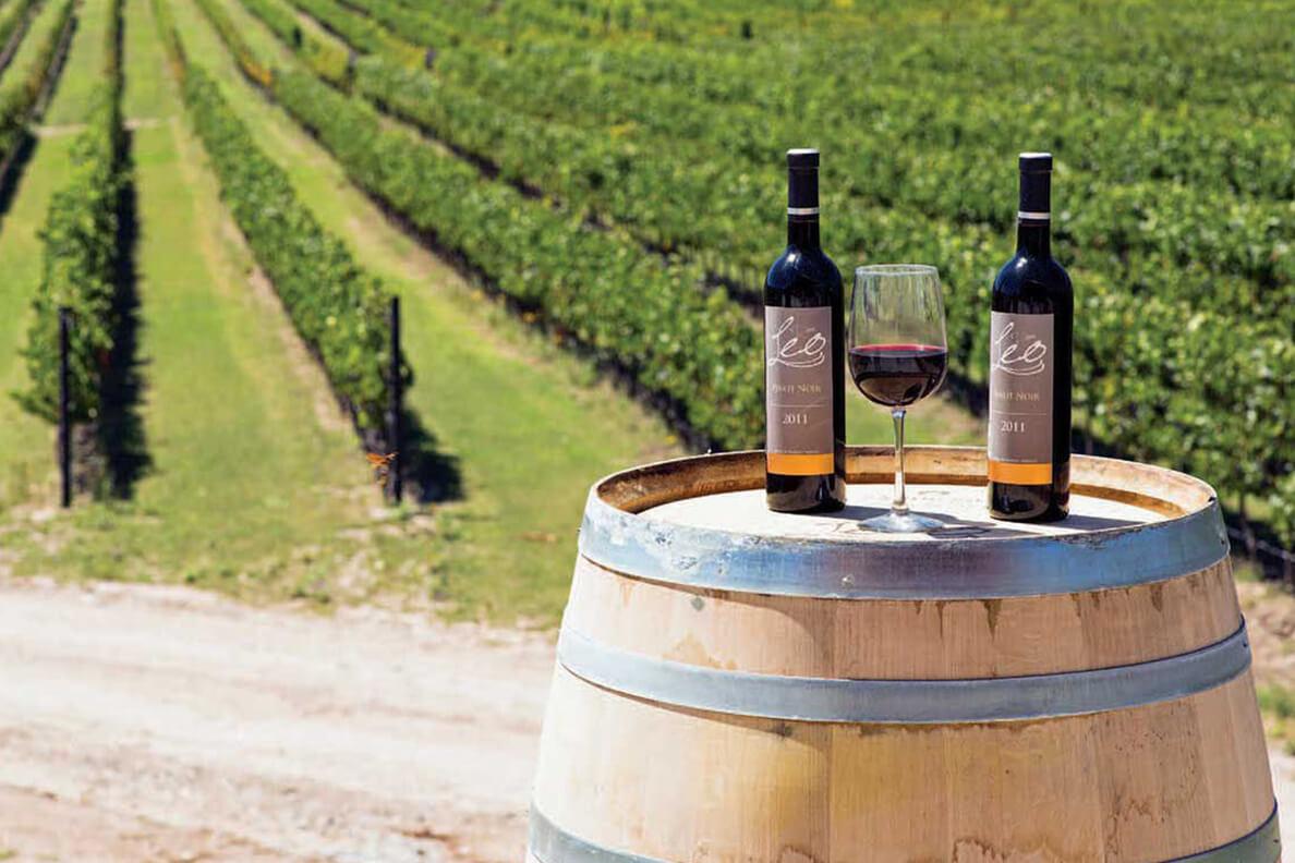 Vino de México es nombrado el mejor Cabarnet Sauvignon del mundo