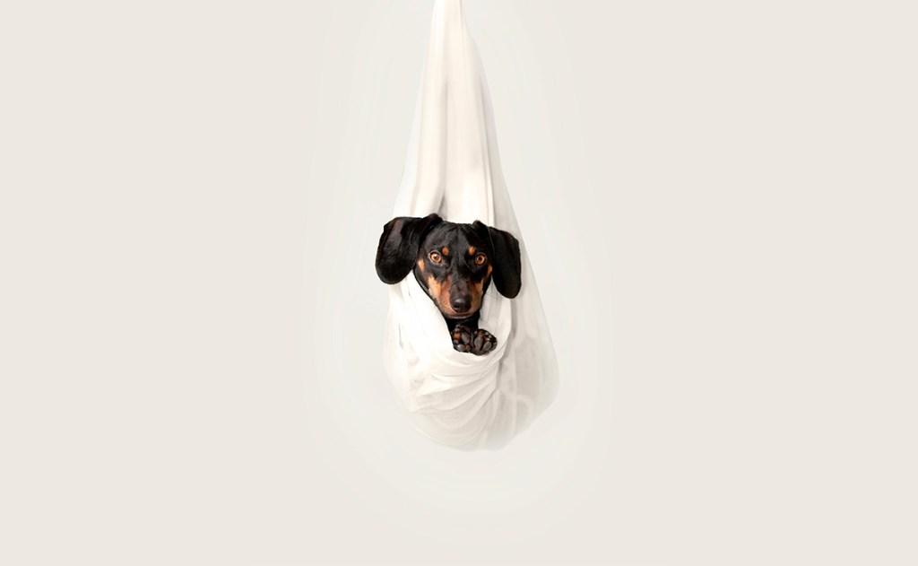 ¿Tu mascota está preparada para la nueva normalidad?