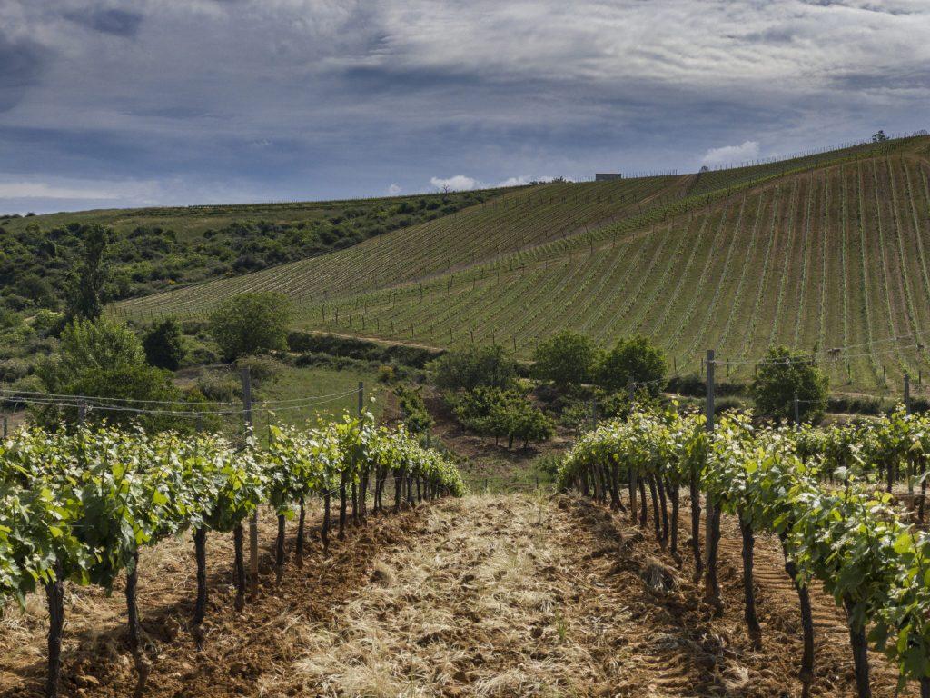 Un brindis por los nuevos vinos blancos del Bierzo de Bodegas Emilio Moro