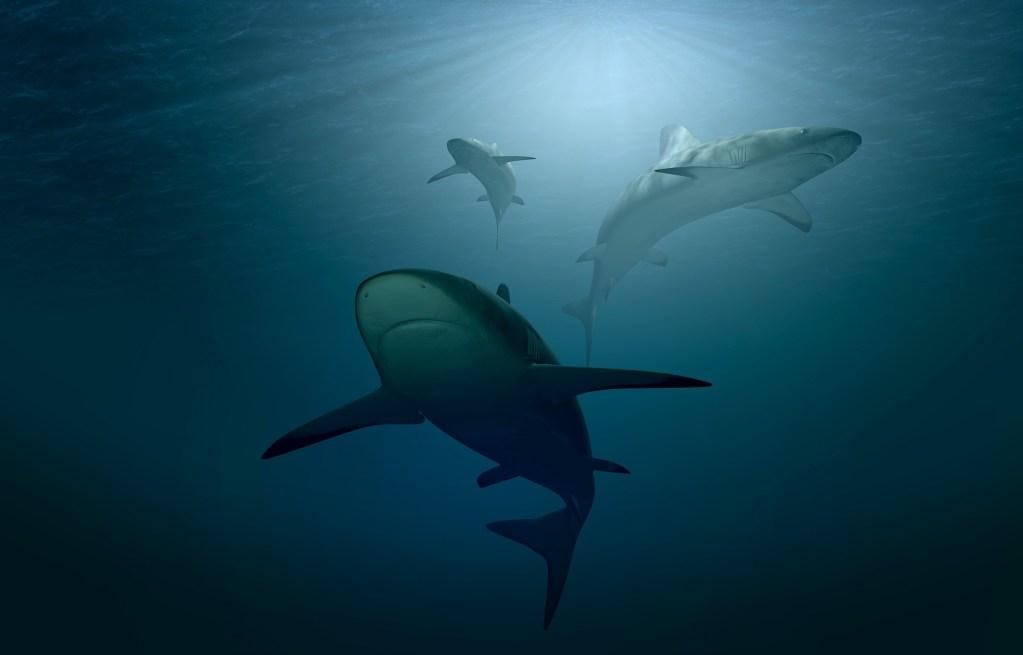 Ulysse Nardin se asocia con Ocearch en beneficio de los tiburones