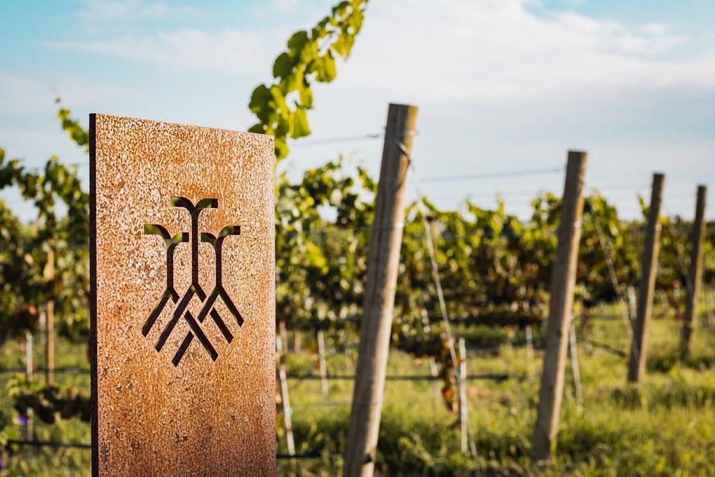 Con 4 medallas en el International Wine Awards, Vinícola Tres Raíces pone a Guanajuato en alto