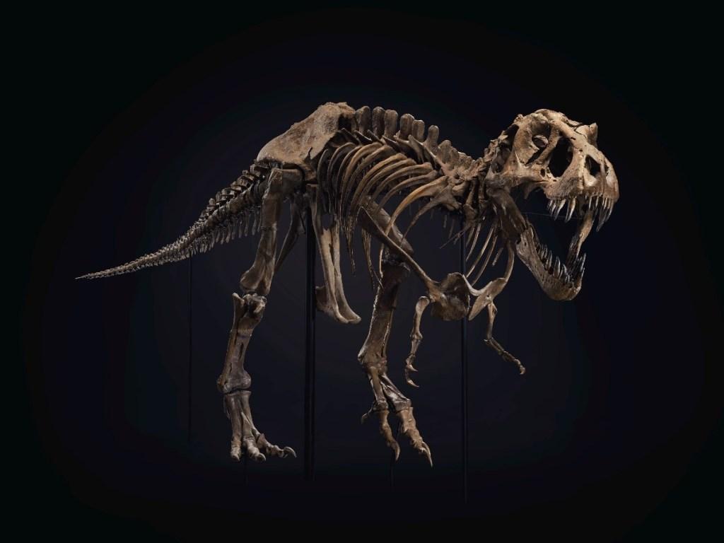 Empieza a hacer espacio en casa porque el esqueleto de este T.Rex podría ser tuyo