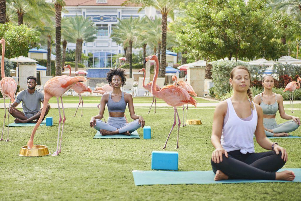 Conecta con la naturaleza mientras haces yoga con flamingos en Baha Mar