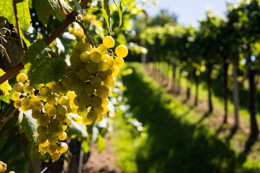 Directo de Galicia, el vino DO Rías Baixas se ubica entre los favoritos de los mexicanos