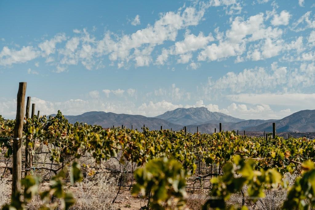 El lujo asiático de Banyan Tree llegará al Valle de Guadalupe con un resort, spa y viñedo