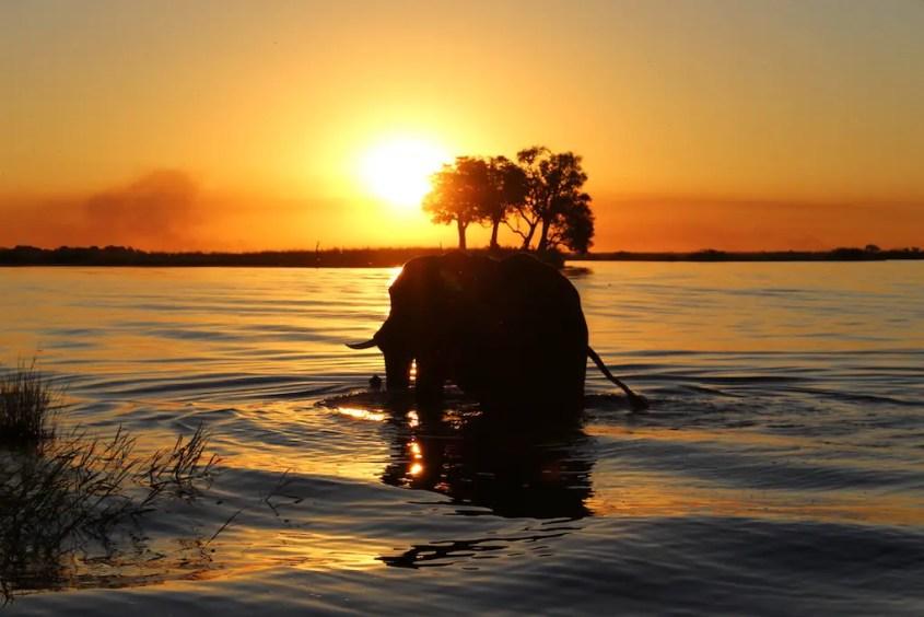Botswana Safari Chobe River Elephant