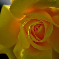 cee's fun foto challenge floral macros