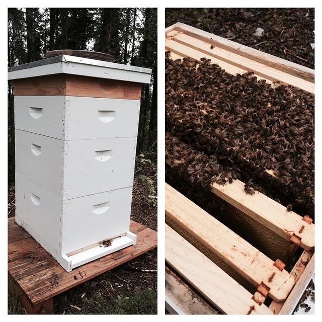 Robert Forto Bees